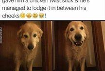 Dogeee
