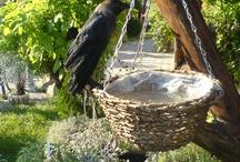 Bird feeder & Bird feeding & Bird house & Birdbath