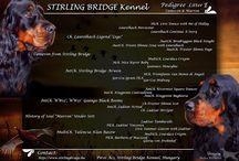 Stirling Bridge gordon setters E litter / 2017. 12. 27-én megszülettek kiskutyáink!  6 kisfiú és 2 kislány Néhány kisfiú még keresi végleges otthonát, szerető gondos gazdáját! :-)