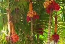 Design: Tropical Planting