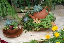 Garden Succuent Ideas