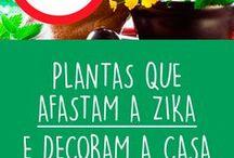 Dicas Plantas
