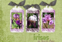 Scrapbooking Pages / by Katheryn Jardine