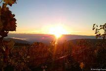 Nos Vignobles / Hermitage, Saint Joseph, Crozes Hermitage, les plus beaux vignobles du septentrion de la Vallée du Rhône.