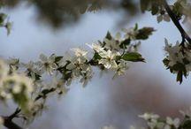 Spring - Frühling