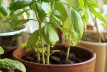Indoor Gardening / www.PowerHouseGrowers.com | @PHGrowers | Sustainably Integrating Urban Agriculture Into Urban Design |