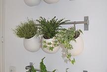 Διακοσμηση με φυτα