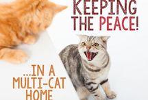 Keep peace in a multi cat home