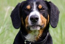 Dog Photos / Photos of dogs