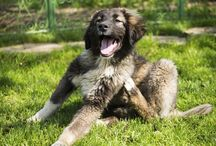 Our Blogs / Articles about pet health from our very own blog!