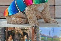 dog knitts