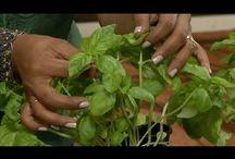 Plant it! / by Reinita Ravago