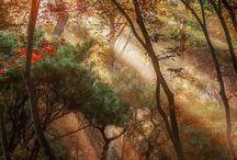 Rays of sunshine!!! <3 / by Adri McDonald
