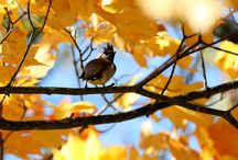 Nature At It's Best / Photos by Audrey Lambert