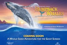 Humpback Whales / Humpback Whales takes audiences to Alaska, Hawaii and the Kingdom of Tonga for an immersive look at how these whales communicate, sing, feed, play and take care of their young / by Reuben H. Fleet Science Center