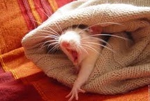 Rats :)