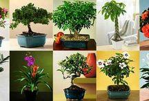Plantas e paisagismo