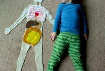 Human body fun