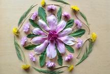 Beauty / Plants, botany, flowers.