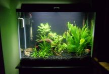 Tropical Fish / www.tanktips.weebly.com