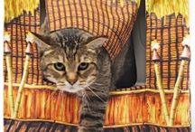 Cat box covers / by Lori Jones