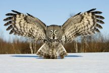 Owls / by Judith Hindall
