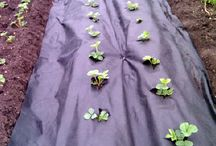 sebze yetiştirmek
