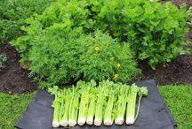 Organic Gardening & No Dig Method Gardening