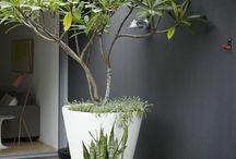 jardin devant cabinet