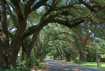 Beautiful Natchitoches / by Katie Procell