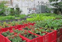 urban garden / farm to table for urban dwellers / by Sonia Spotts