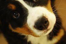 Cani buffi & carini
