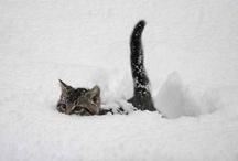 Schneetiere