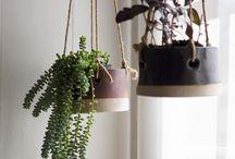 Indoor Garden / Plants on the inside! / by Valerie Cochran