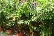 Plantes detox intérieur et chambre
