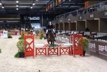 Cheval de sport / Jumping, dressage, concours complet... Il y a autant de chevaux différents que de sports équestres. A chacun ses qualités, à chacun ses exigences, à chacun ses beautés. La preuve avec ce Pinterest by Equidia.
