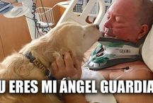 nuestros angeles guardianes