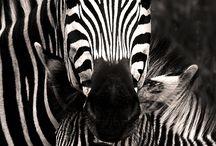 Animalsy
