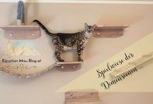 Katzenwand - Cat wall / Ein Traum jeder Katze, eine individuelle Katzenwand / Kletterwand.  A dream for every cat, a fantastic cat wall.