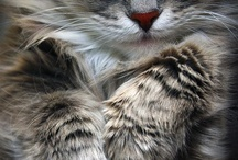 gatti dolcissimi