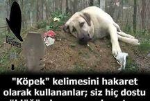Köpek Dostlarımız