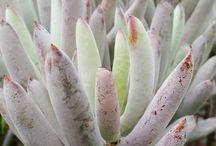 Succulents at Our Farm Greenhouses / awesome plants we have here in the greenhouse