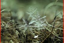 Snowflakes / by Kelli Last Meyer