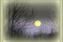 Moons / by Diana Nesbitt King