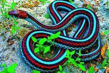Reptiles / Cute or beautiful reptiles