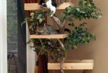 Cat furniture and accessories