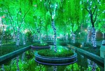 « China » . Magical Forest in Shanghai .