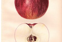 one apple a day / apples in art and life / by Bozena Wojtaszek