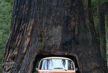 california love / by Angel Kittiyachavalit