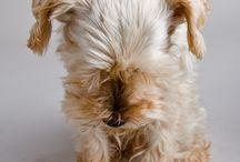 Puppy Lovin